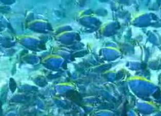 モルディブの海7
