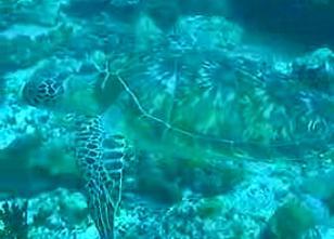 モルディブの海8